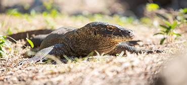 komodo dragon island tour