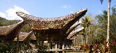 toraja traditional house