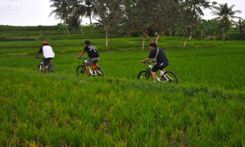 bali ubud cycling day tour adventure