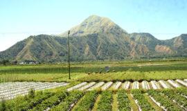 Sembalun north lombok
